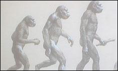 Evolution_13046